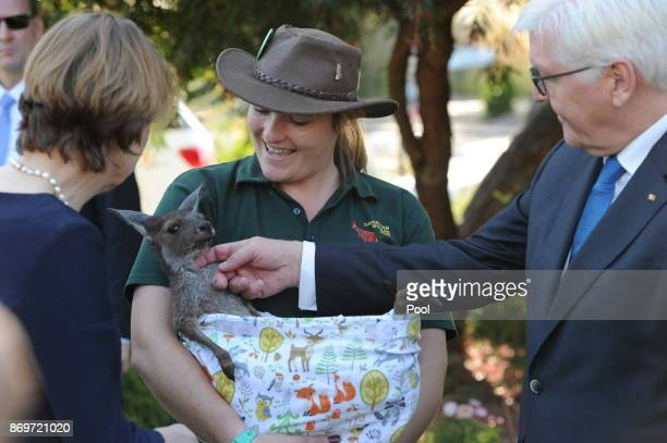 President of the Federal Republic of Germany FrankWalter Steinmeier and his wife Elke Büdenbender seen with baby kangaroo 'Nicholas' as they visit...