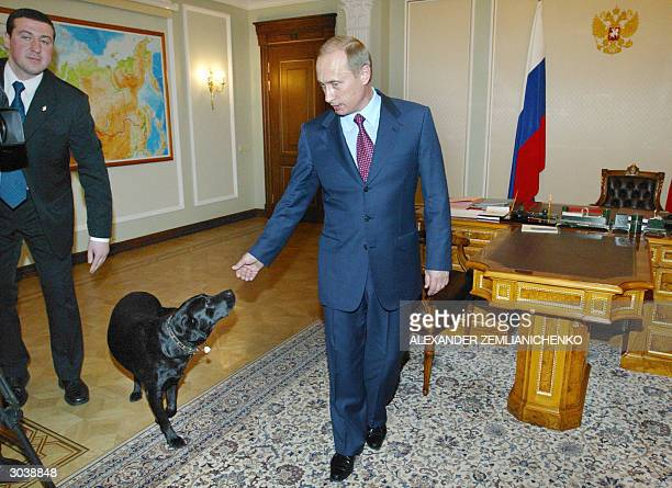 President Vladimir Putin pets his dog Conny before one of his meetings with officials in his office in the NovoOgaryovo residence outside Moscow 03...