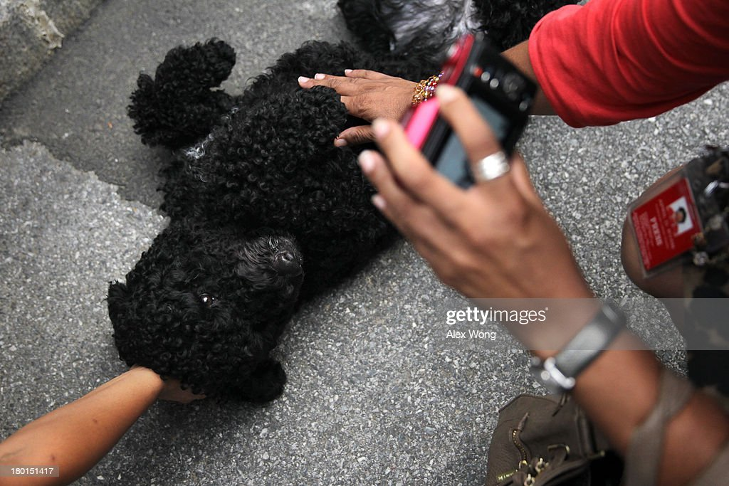 Presidential dog Sunny is pet by members of the White House Press Crops outside the White House Press Room as she is brought out for a walk by her handler September 9, 2013 at the White House in Washington, DC. Sunny joined the Obama family on August 19, 2013.