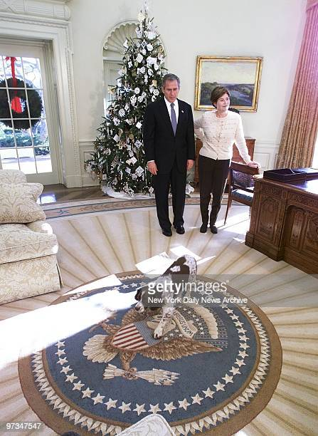 Presidential pooch Spot an English springer spaniel trots across a new carpet on the floor of the White House's Oval Office in search of a good place...