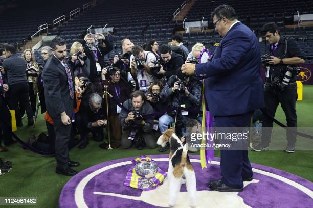 Press members take photos of Gabriel Rangel's 'King' the Wire Fox Terrier after it won Best in Show at the 143rd Westminster Kennel Club Dog Show at...