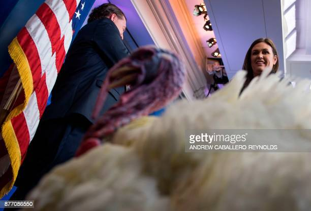 US Press Secretary Sarah Huckabee Sanders looks on at Wishbone the turkey during a press preview before the pardoning ceremony at the White House in...