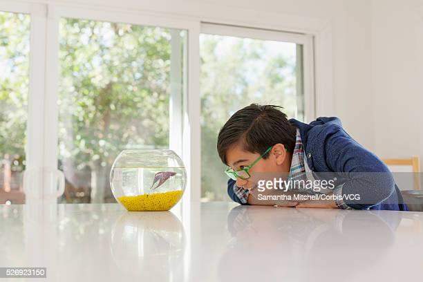 Pre-teen boy (13-15) watching fish in fishbowl