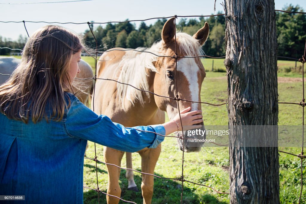 Preteen girl stroking horses nose behind a fence. : Stock Photo