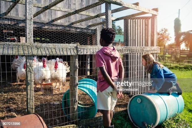 """crianças pré-adolescentes, olhando para a turquia em um velho celeiro na primavera. - """"martine doucet"""" or martinedoucet - fotografias e filmes do acervo"""