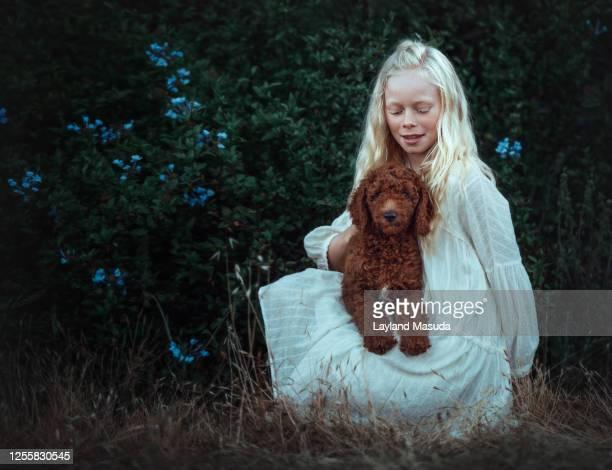 pretty blond girl holding puppy - goldendoodle stock-fotos und bilder