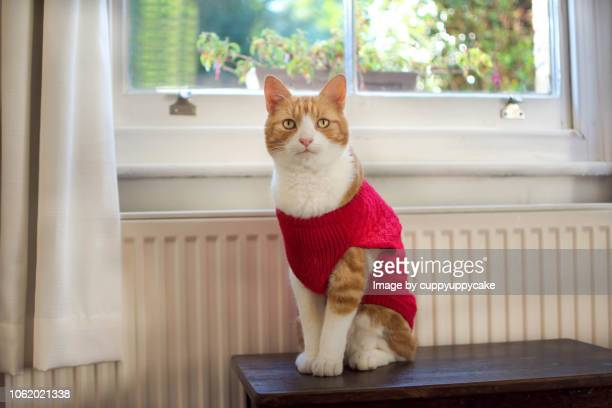 pretty boy - cat costume stock photos and pictures