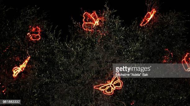 Pretty Butterfly Lights