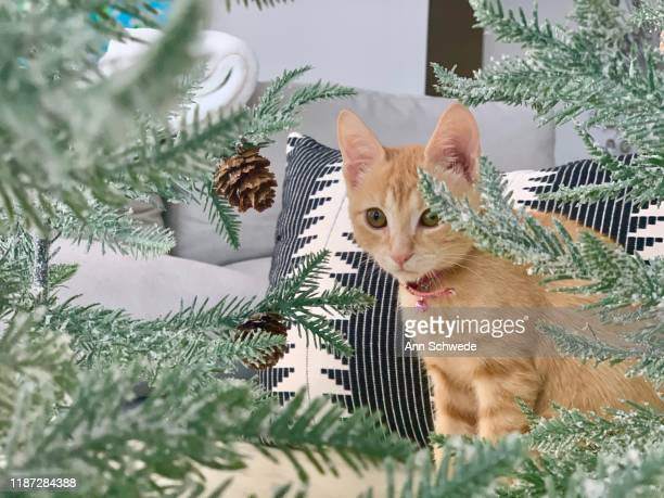 pretty christmas kitty - christmas kittens stock pictures, royalty-free photos & images