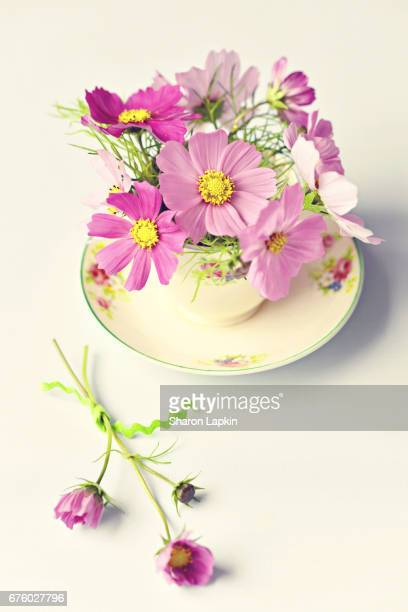 Pretty cosmos flowers in antique teacup