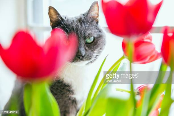 Pretty Gray Cat With Red Flowers