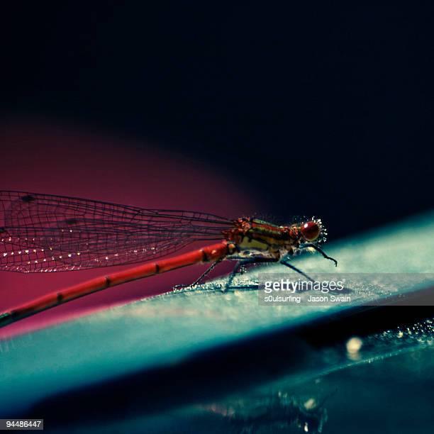 pretty in pink - damselfly - s0ulsurfing stock pictures, royalty-free photos & images