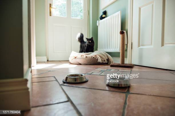 pretty kitty - pet bed stock pictures, royalty-free photos & images