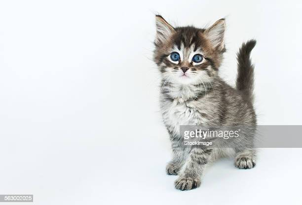pretty kitty - kitten stock pictures, royalty-free photos & images