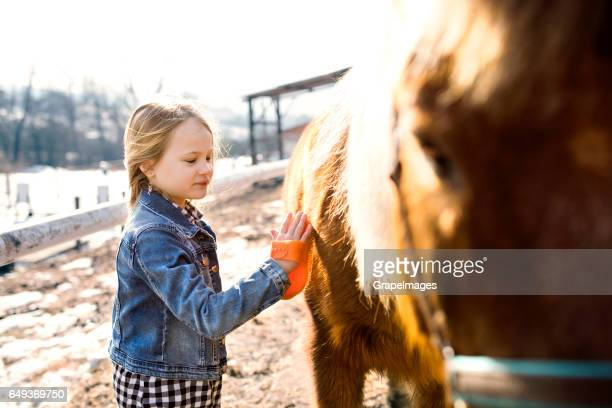 Pretty little girl grooming horse on sunny winter day.