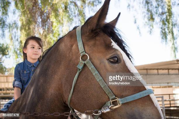 Pretty little girl learning to ride her Shire horse