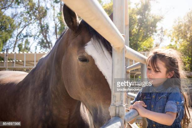 Pretty little girl visits her Shire horse at stables