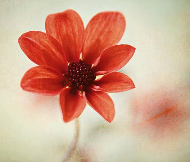 Pretty Orange Flower Photos