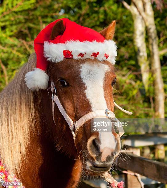 pretty pony in santa hat for christmas - christmas horse stock pictures, royalty-free photos & images