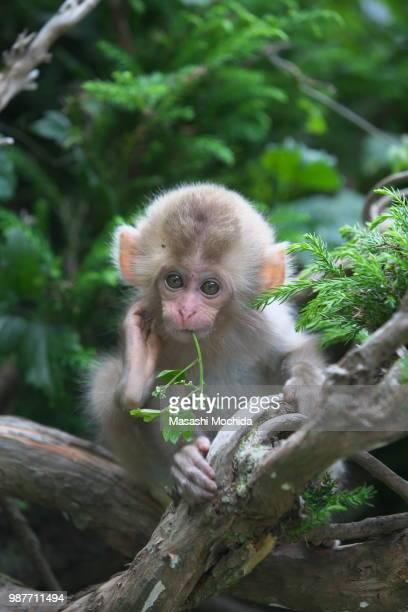 pretty pose - jeune animal photos et images de collection