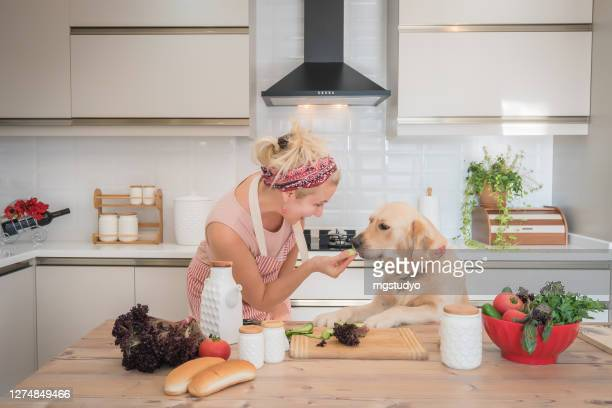 pretty woman with apron feeding her dog at table in the kitchen. - pet owner stock pictures, royalty-free photos & images