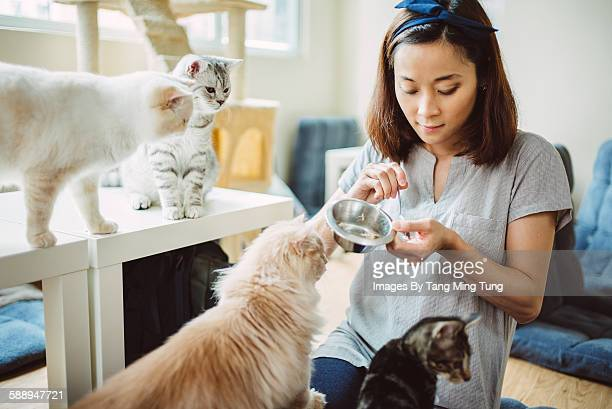 pretty young lady feeding cats and kittens - pet equipment stock pictures, royalty-free photos & images