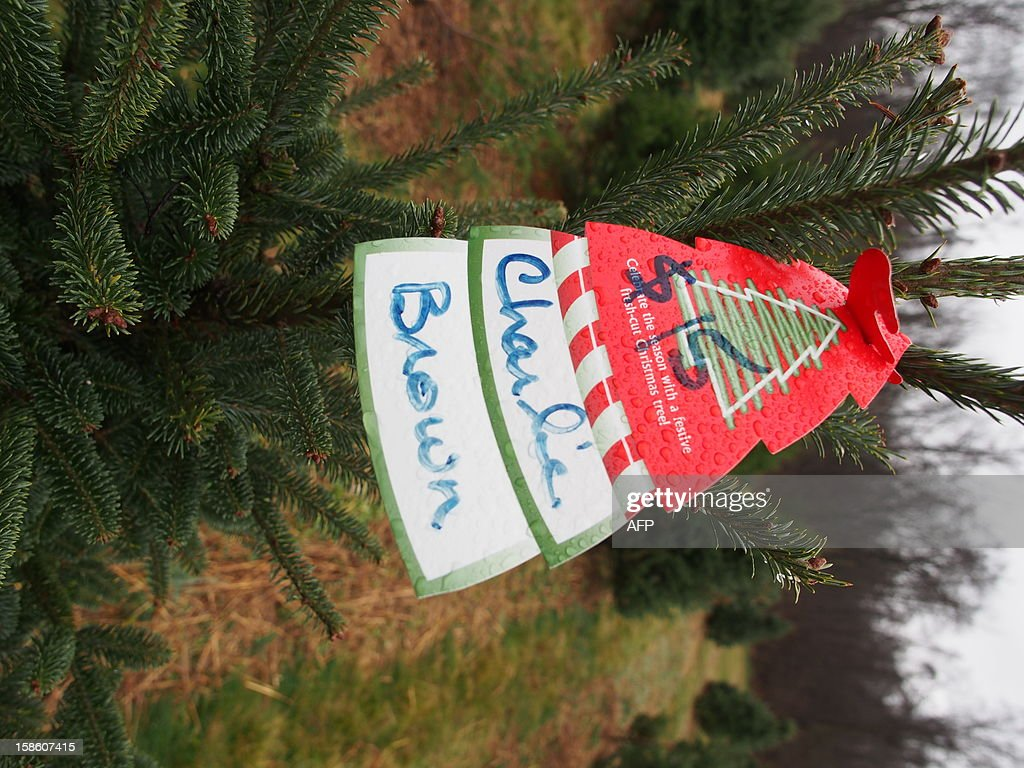 A $15 price tag adorns the top of a 'Charlie Brown' Christmas tree at Ridgefield Farm in Harper's Ferry, West Virginia, December 9, 2012. Tree growers report growing demand among consumers for smaller and more natural looking trees. Tree growers report growing demand among consumers for smaller and more natural looking trees. AFP PHOTO / Robert MacPherson
