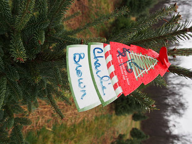 a 15 price tag adorns the top of a charlie brown christmas tree at - Charlie Brown Christmas Tree For Sale