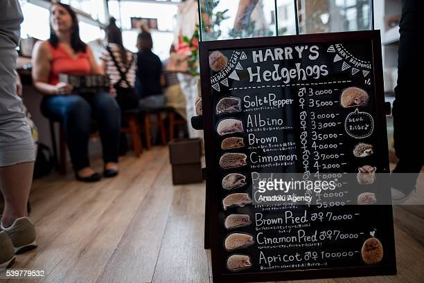 Prices of the hedgehogs on sale are seen at Harry Hedgehog's cafe in Roppongi district of Tokyo Japan on JUNE 12 2016 The hedgehog's cafe is one of...