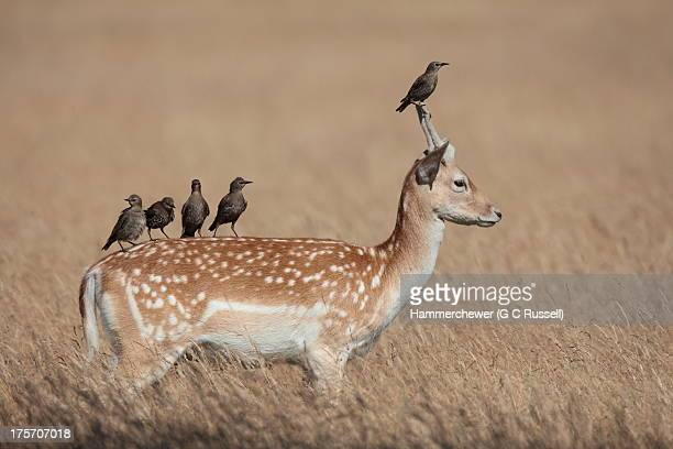 pricket picket - symbiotic relationship stock pictures, royalty-free photos & images