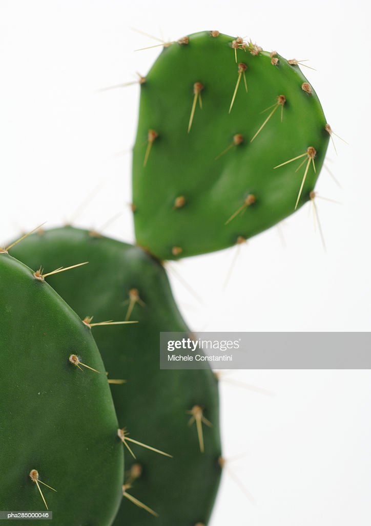 Prickly pear cactus, close-up : Stockfoto