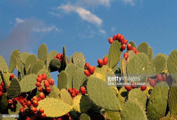 Prickly pears Sicily Italy