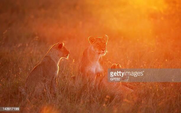 Pride at dawn
