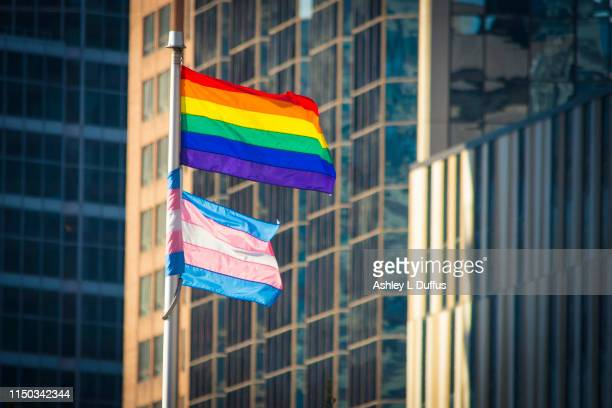 pride flag and trans flag - pride flag stock pictures, royalty-free photos & images