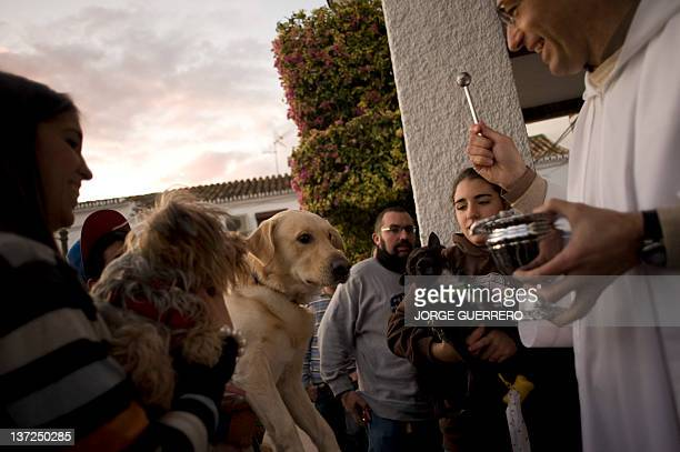 A priest blesses dogs in Churriana near Malaga on January 17 on Saint Anthony's Day Dogs cats rabbits and even turtles many dressed in their finest...
