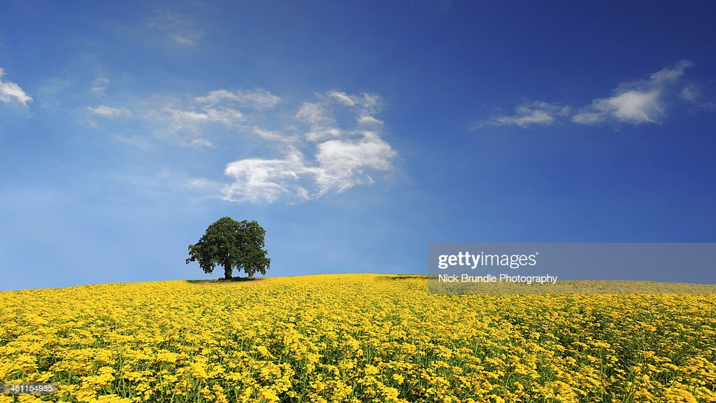Primary Colours : Stock Photo