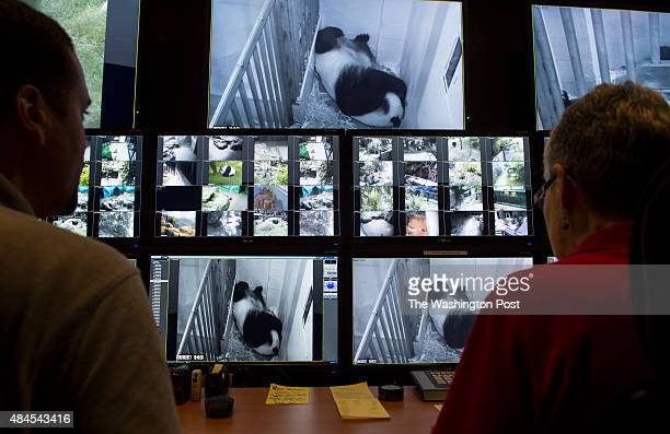 Primary giant panda keeper Juan Rodriguez left and Fonz volunteer Helen Gaul monitor Mei Xiang giant female panda cradling her newborn cub top center...