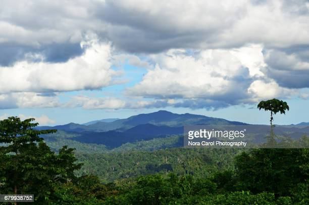 primary rain forest in borneo - nature reserve stock pictures, royalty-free photos & images