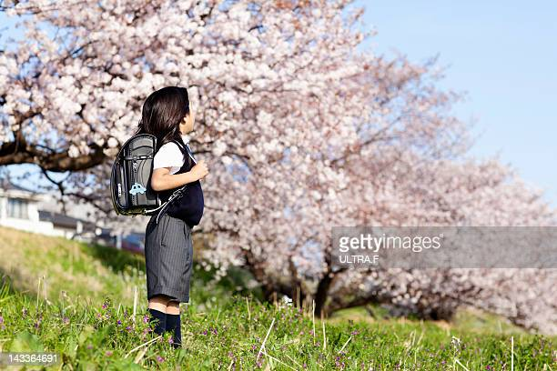 Primary schoolboy looking at cherry tree