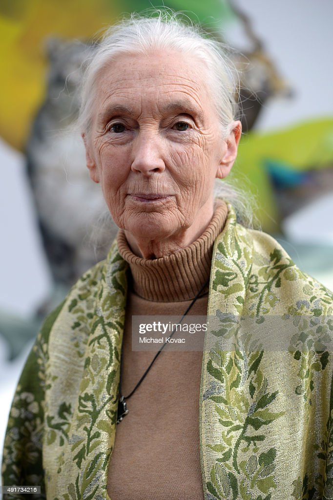 Primatologist and anthropologist Jane Goodall attends the Vanity Fair New Establishment Summit at Yerba Buena Center for the Arts on October 7, 2015 in San Francisco, California.
