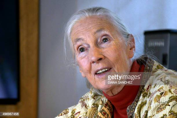 Primatologist and conservationist Jane Goodall speaks during an interview with AFP in Bogota on November 12 2015 Goodall considered to be the world's...