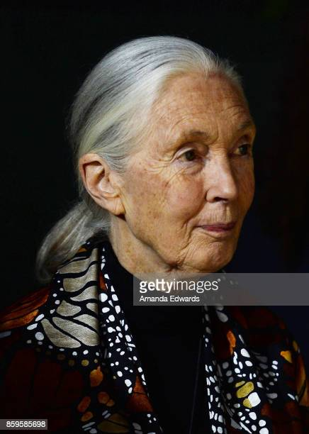 Primatologist Dr Jane Goodall arrives at the premiere of National Geographic Documentary Films' Jane at the Hollywood Bowl on October 9 2017 in...