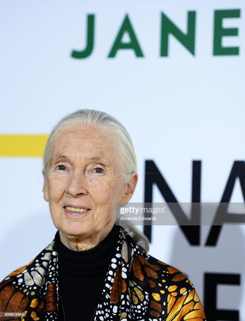 Primatologist Dr. Jane Goodall arrives at the premiere of National Geographic Documentary Films' 'Jane' at the Hollywood Bowl on October 9, 2017 in Hollywood, California.