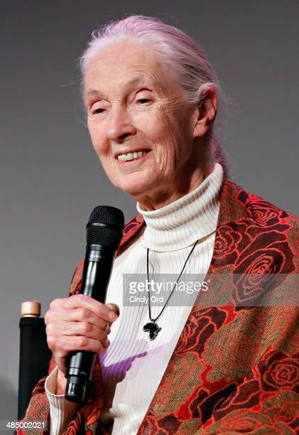 Primatologist Dr Jane Goodall attends Dr Jane Goodall Alastair Fothergill and Keith Scholey of Disney Nature's 'Bears' at Apple Store Soho on April...
