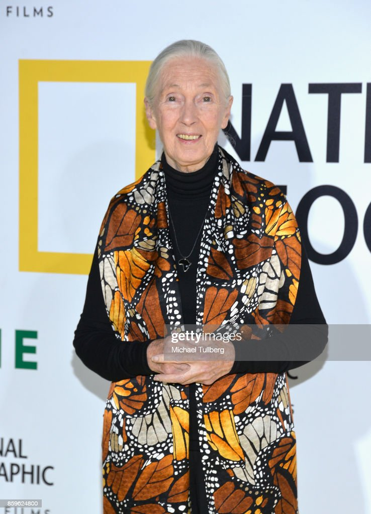 Primatologist Dr. Jane Goodall attends the premiere of National Geographic Documentary Films' 'Jane' at the Hollywood Bowl on October 9, 2017 in Hollywood, California.