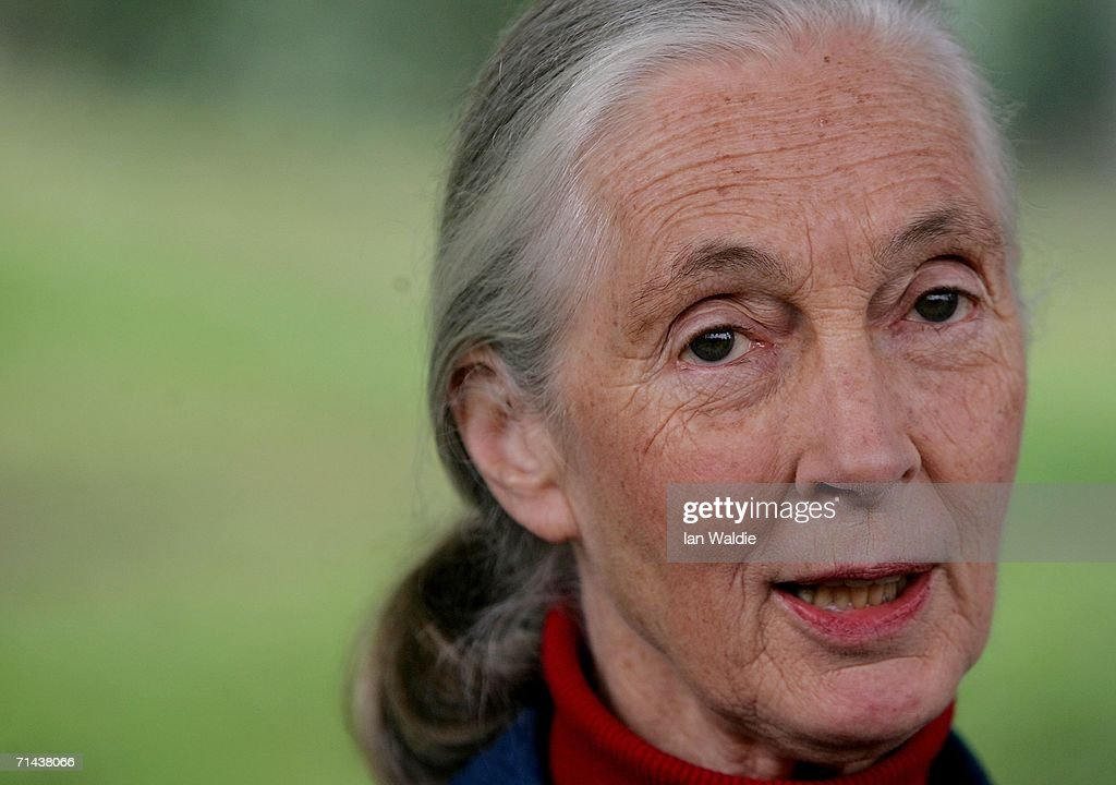 Primatologist Dr. Jane Goodall holds a press conference at Taronga Zoo July 14, 2006 in Sydney, Australia. Dr. Goodall visited the zoo to raise awareness of the plight of wild Chimpanzees. The zoo's colony of Chimps includes several family groups, and three of the oldest Chimpanzees in zoos.
