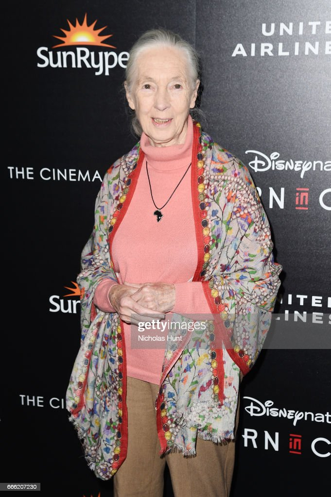 """Disneynature With The Cinema Society Host The Premiere Of """"Born In China"""""""