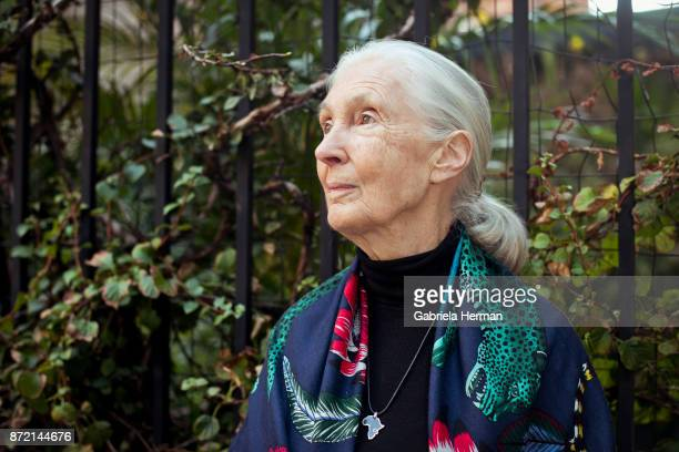 Primatologist Jane Goodall is photographed for New York Times on October 17 2017 in New York City