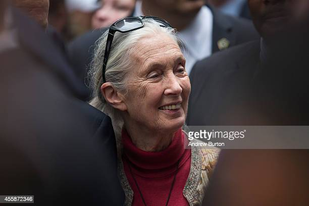 Primatologist Jane Goodall participates in the People's Climate March on September 21 2014 in New York City The march which calls for drastic...
