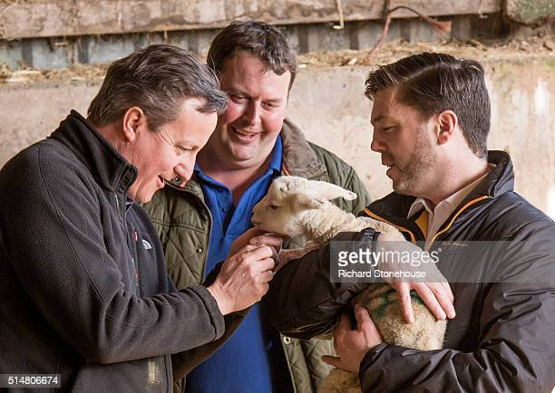 Prime Minister David Cameron standing with farm owner Richard Williams strokes a Welsh Lamb held by Secretary of State for Wales Stephen Crabb during...